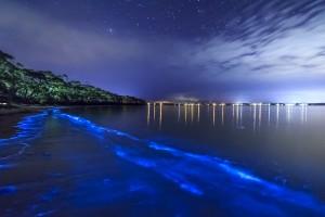 Bioluminescent-Mosquito-Bay
